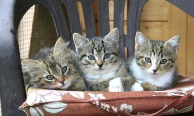 """Tag der offenen Tür in der Katzenpension """"Schnurri"""""""