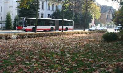 Laubwochen in der Stadt Zittau