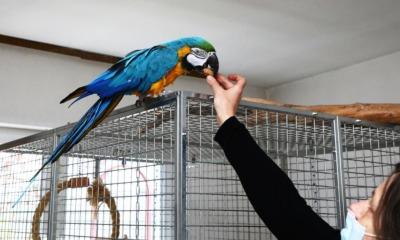 Willi wird der neue Empfangschef im Tierpark