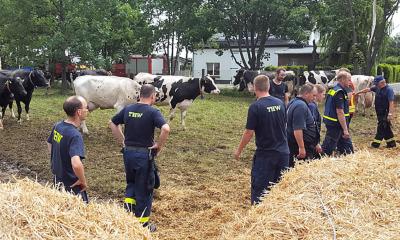 THW-Einsatz im Milchviehstall