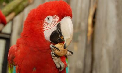 Tierpark jetzt im Geflügelpest-Sperrbezirk