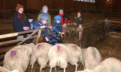 Nachwuchsranger bei den Schafen