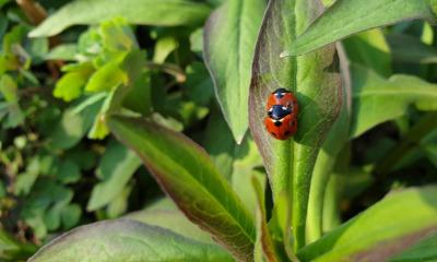 NABU-Aktion: Insekten zählen
