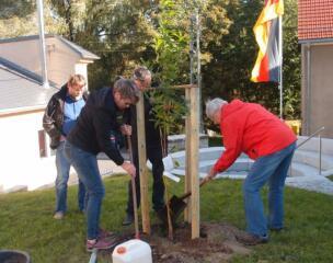 Ein Pfirsichbaum für den Bibelgarten