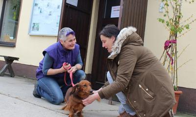Willkommen in der Hunde-Kita