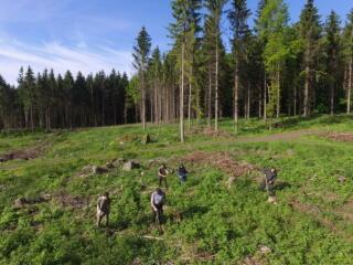 Frisch gepflanzte Bäume sind doch wie Kinder