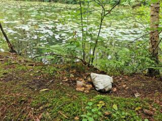 Ärgernis Windeln im Stadtwald von Niesky